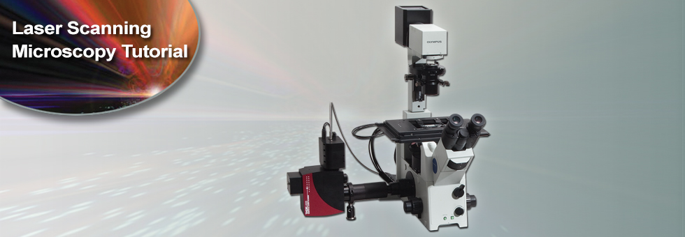 Laser Scanning Microscopy Tutorial