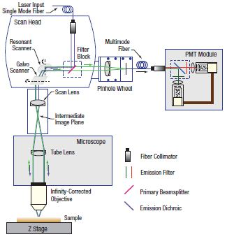 Confocal System Schematic