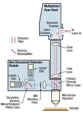 Multiphoton Essentials Schematic