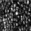 Retina Cone Cells